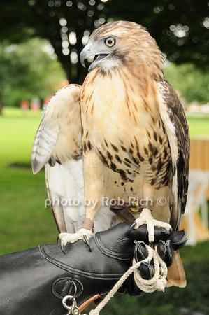 Sonia (Adult female Red Tailed Hawk)<br /> photo by Rob Rich © 2010 robwayne1@aol.com 516-676-3939