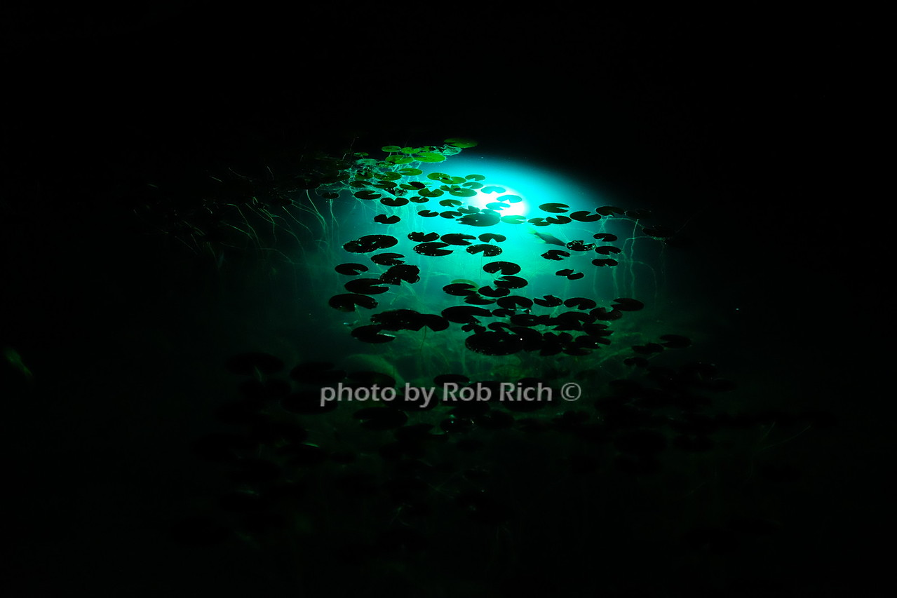 photo by Rob Rich/SocietyAllure.com © 2016 robwayne1@aol.com 516-676-3939