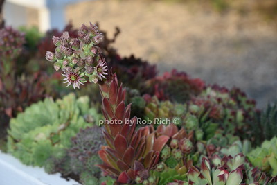 cactus garden  photo  by Rob Rich/SocietyAllure.com © 2016 robwayne1@aol.com 516-676-3939