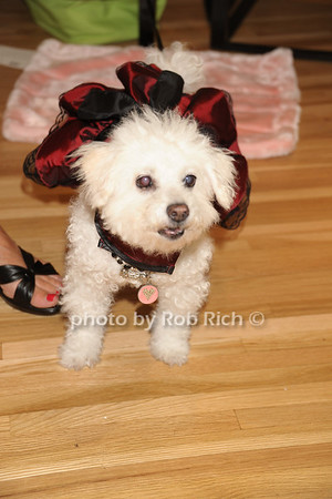 Lucy photo  by Rob Rich © 2011 robwayne1@aol.com 516-676-3939