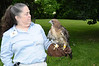 Catherine Schelp, Red Tailed Hawk<br /> photo by Rob Rich © 2009 robwayne1@aol.com 516-676-3939