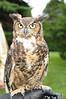 Barred Owl<br /> photo by Rob Rich © 2009 robwayne1@aol.com 516-676-3939