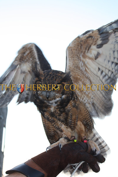Get Wild! The Evelyn Alexander Wildlife Rescue Center of the Hamptons 8/20/11