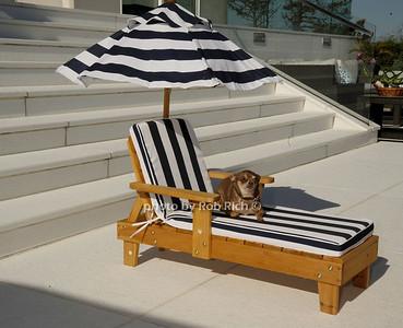 Ginger photo by Rob Rich/SocietyAllure.com © 2013 robwayne1@aol.com 516-676-3939