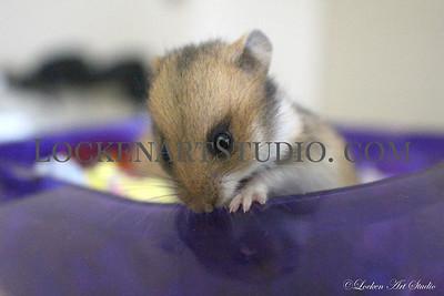 Fuzzy 2