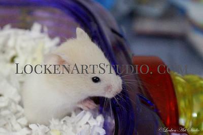 Princess Photo 2