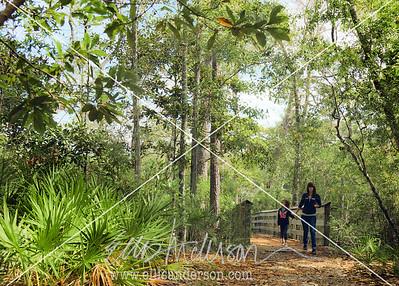 Nature trail McLeod 2388