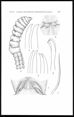 The polychaetous annelids of Japan, part II