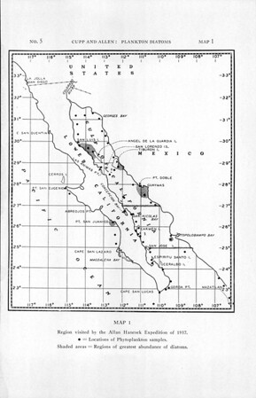 Plankton diatoms of the Gulf of California, obtained by Allan Hancock Pacific Expedition of 1937