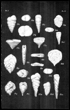 Some Textulariidae of the Pacific Ocean :  (Plates 13-16)
