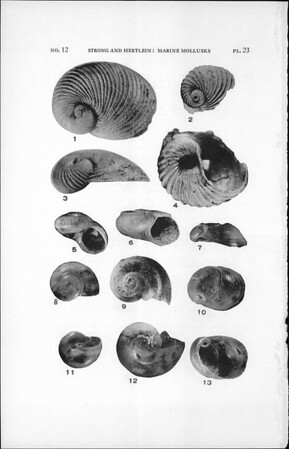 Marine mollusks from Panama, collected by the Allan Hancock expedition to the Galapagos Islands, 1931-1932