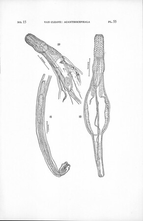 The Acanthocephala collected by the Allan Hancock Pacific Expedition, 1934