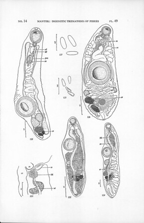 Digenetic trematodes of fishes from the Galapagos Islands and the neighboring Pacific