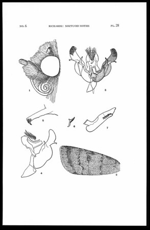 The noctuoid moths of the Galapagos Islands from the collections of the Allan Hancock Foundation