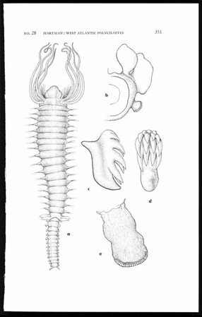 Deep-water benthic polychaetous annelids off New England to Bermuda and other North Atlantic areas