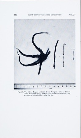 AHF-PUB-PE-27-02