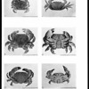 Littoral brachyuran fauna of the Galapagos archipelago
