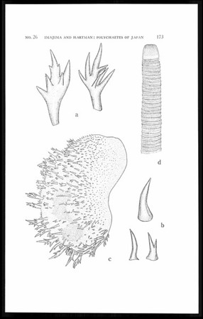 The polychaetous annelids of Japan, part I
