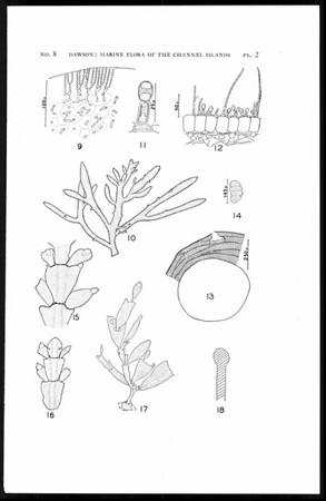 Contributions toward a marine flora of the Southern California Channel Islands, I-III