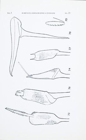 AHF-PUB-PE-10-02