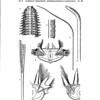 Orbiniidae, Apistobranchidae, Paraonidae, and Longosomidae
