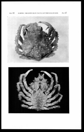 Littoral brachyuran fauna of the Galapagos archipelago
