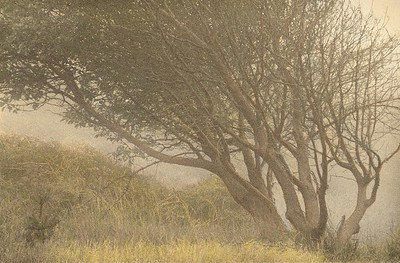 Sea Ranch Mist, Sea Ranch, California