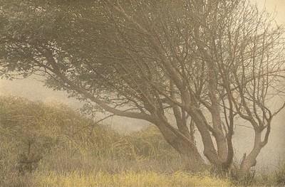 Sea Ranch Mist, Sea Ranch, California