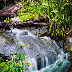 Quail Botanical Gardens, Encinitas, CA