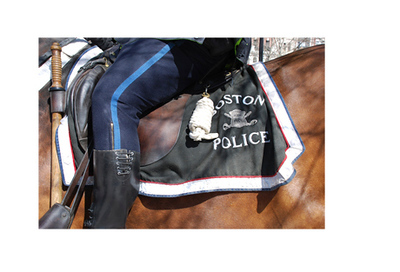 Boston Mounted Police Horse, with rider.