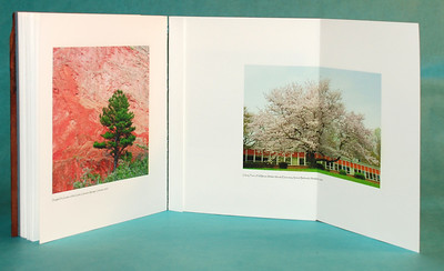 """Trees"" book showing one of the fold-out pages."