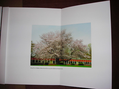 One of about 7 fold-out pages of Tree book.