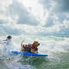 DSC05981 David Scarola Photography, Furry Friends Dog Surfing Competition 2016, Event Photography in Palm Beach County