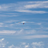 Hang Gliders and Paragliders over Makapuu-95