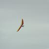 Cloudy Day Flyin-88