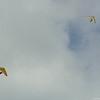 Cloudy Day Flyin-92