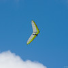Hilo Flier-9