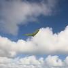 Morning Flight-15