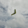 Overcast Flying-16