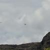Overcast Flying-82