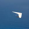 A bird's life-17