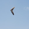Clear Sky Flying-112