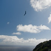 Flying Companions-15