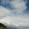 Flying Companions-18
