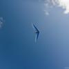 Flying Companions-17