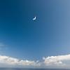 Flying Companions-13