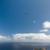 Flying Companions-14