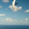 Blu Sky Flying-90