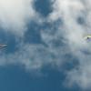 Wings over Makapuu-20
