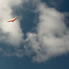 Wings over Makapuu-16